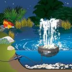 water starlet