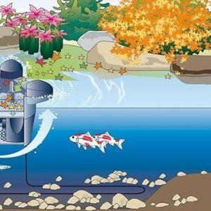 Swimskim 25 oase